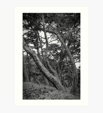Baker Beach Trees 2 Art Print