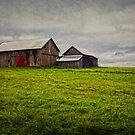 The Barn by Debra Fedchin