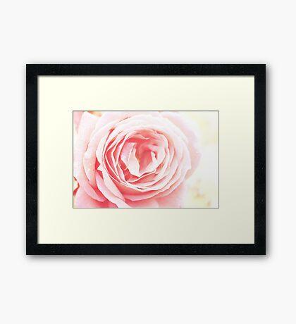 Scent Of A Rose Framed Print