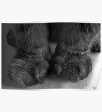 My! What big paws you have! Poster