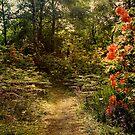 Flower walk by Jasna