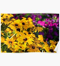 Yellow Conflowers Poster