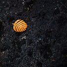 Fallen Fagus Leaf, Mt Field, Tasmania by Jim Lovell
