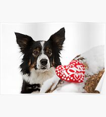 Border collie on Valentines day Poster