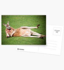 Ehibitionist Kangaroo Postcards