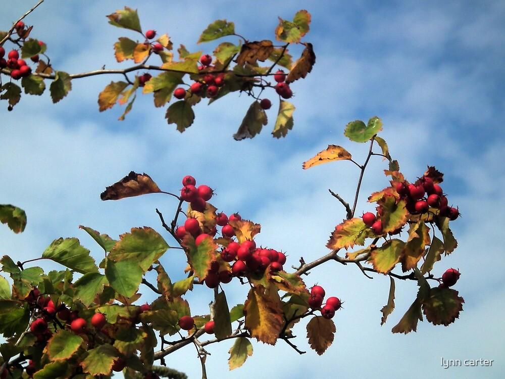 Autumn Berries by lynn carter