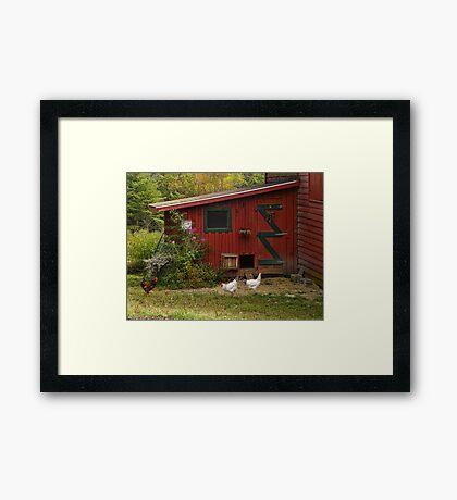 The Red Chook Shed Framed Print