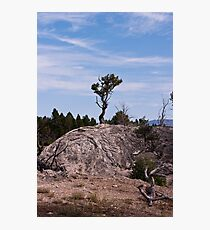 Lone Determined Survival Photographic Print