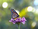 Monarch Butterfly by FrankieCat