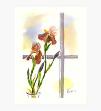 Irises in the Window Art Print