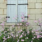 White Shutters by Susan Moss