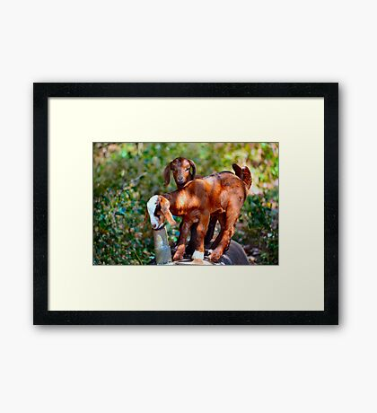 Kidding Around - Double Trouble Framed Print