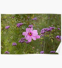 Flowers at Delaval Hall Poster