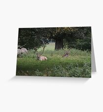 Two Stags (Dinefwr Deer Park) Greeting Card