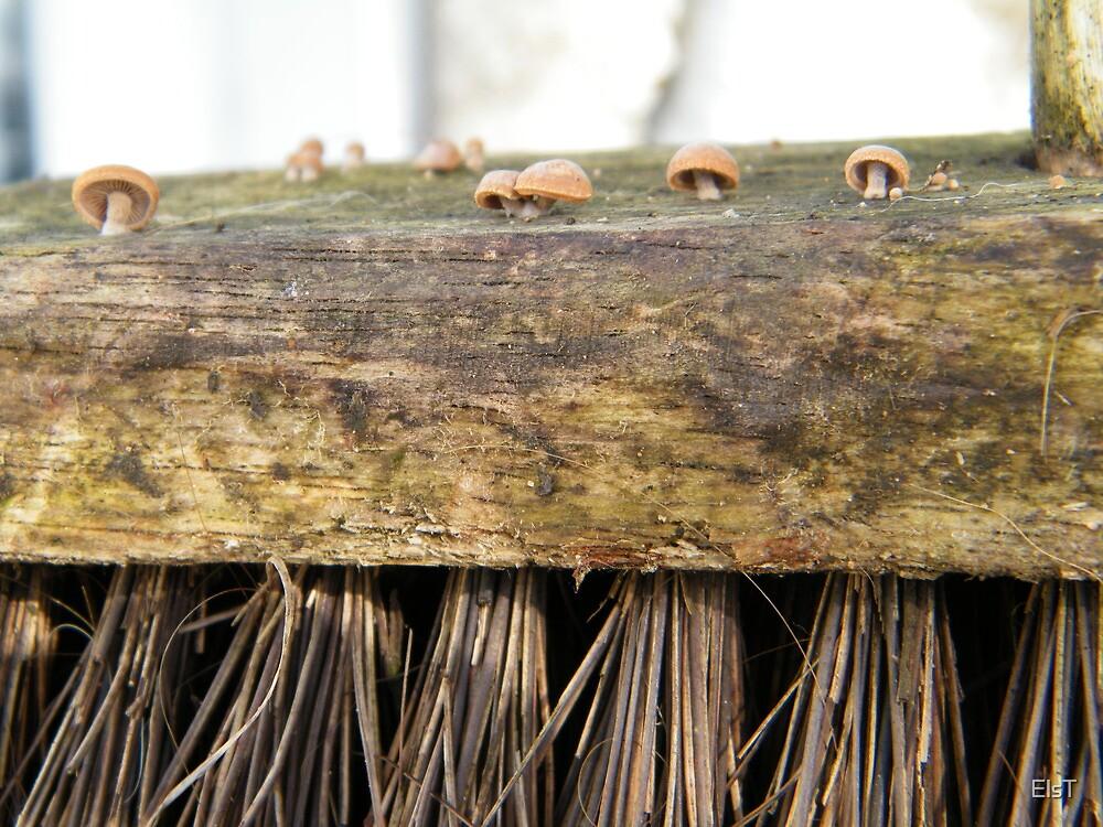 Garden Brush with tiny mushroom colony by ElsT