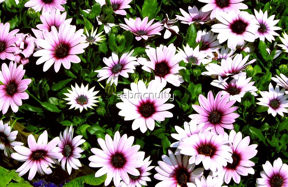 Purple stillness by sebmcnulty
