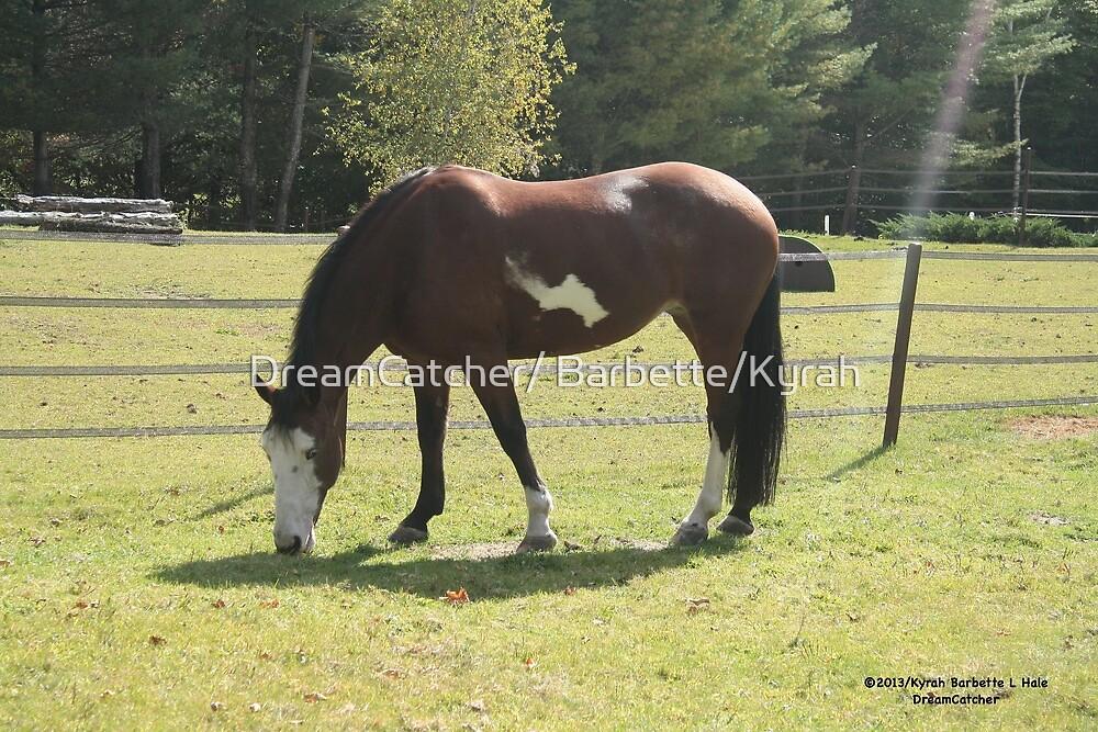 September Horse by DreamCatcher/ Kyrah