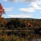 Fall Foliage by Anne Smyth