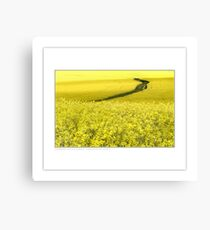 Canola (and rabbit) Canvas Print