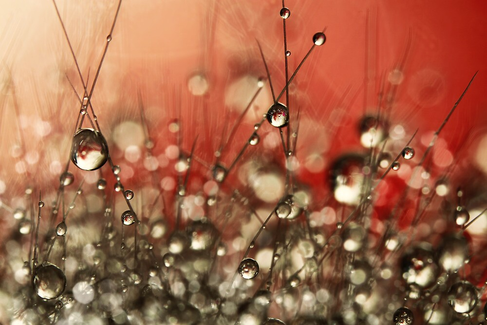 Riot Red Cactus Sparkles by Sharon Johnstone