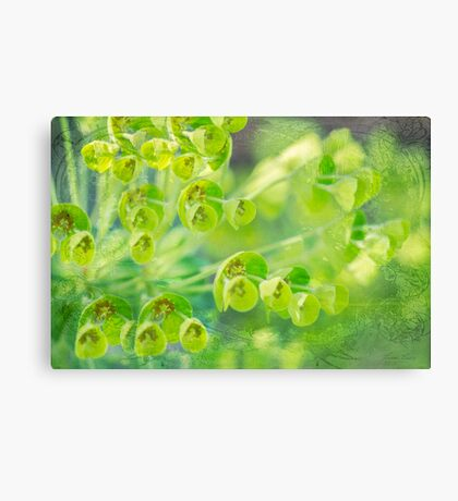 Green is the color of Spring Canvas Print
