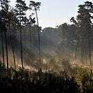 Sunrise in Orderbos  by Paulo van Breugel