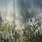Glowing in the morning light by Paulo van Breugel