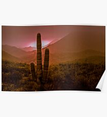 Cactus with Setting Sun Poster