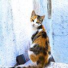 Cat in Fira by Barbara  Brown
