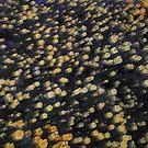Flowerart by Hulko76
