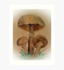 Agaricus xanthoderma Art Print