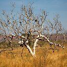 The Plan B Tree by David Haworth
