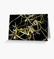 Dockrillia teretifolia Greeting Card