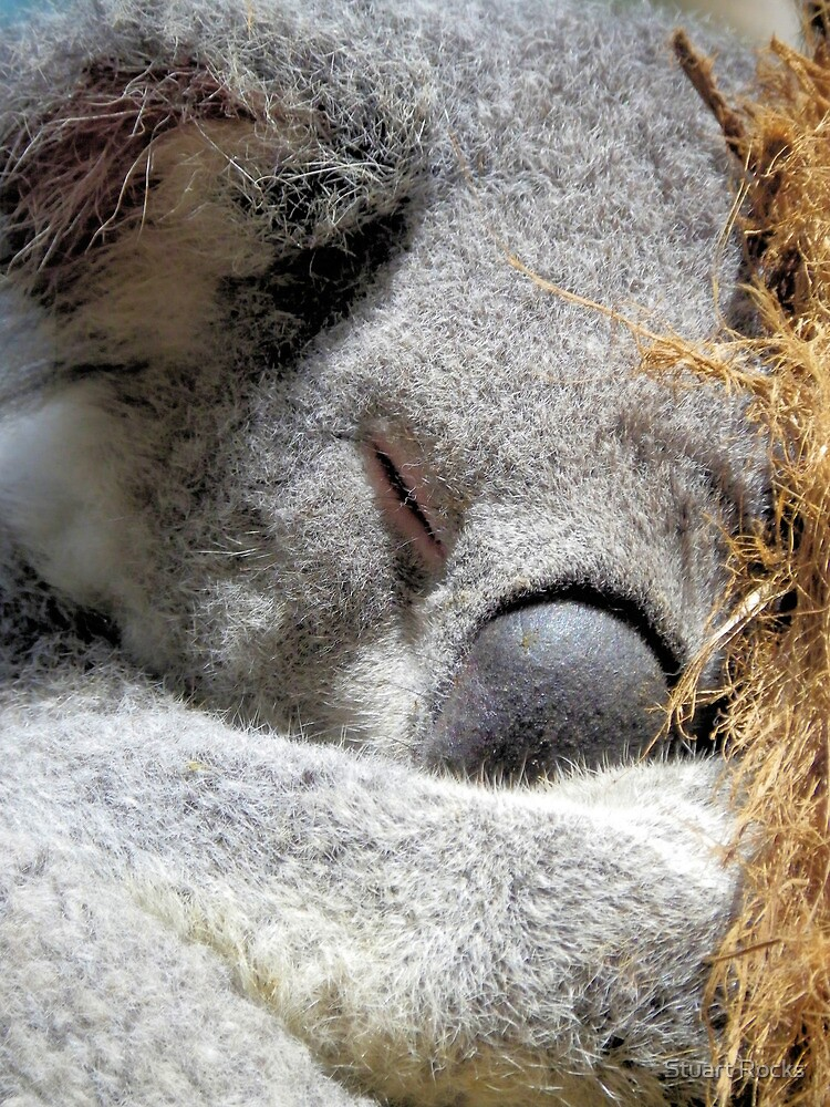 Koala Love 3 by Stuart Rocks