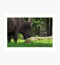 Bison and New Born Calf Art Print