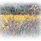 Butter Cup Meadow by carolhynes