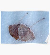 Aspen Leaves in Snow Poster