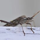 Invasion of the Stink Bug by Wviolet28
