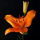 Two Lilies by Jeffrey  Sinnock