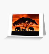 Acacia Elephant Sunset Greeting Card