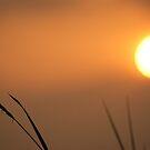 Southern Sunset by DES PALMER