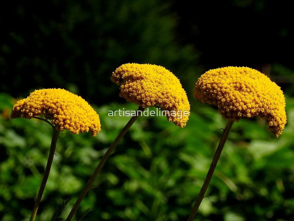 Floral Extravaganza ~ Part Five by artisandelimage