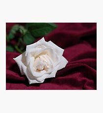 White Rose on Blood Red Velvet Photographic Print