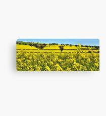A Sea of Yellow - Burley Griffen Way NSW Australia Canvas Print