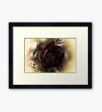 Velvet Dreams .... Framed Print