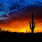 Sonoran Style Sunset  by Saija  Lehtonen