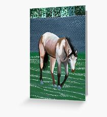 Buckskin Quarter Horse Portrait Greeting Card