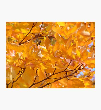Golden Orange Autumn Leaves Tree Art Prints Photographic Print