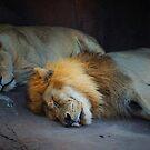 Sleeping lions by Mark Walker