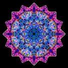 Untitled 37d by allisonberryart